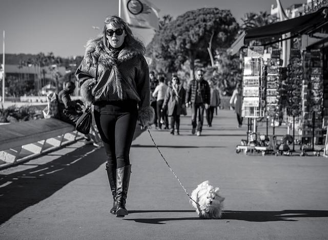 新しい記事: ファッションシーンとしての<br>犬のお散歩