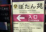 新しい記事: 上野東照宮の寒牡丹